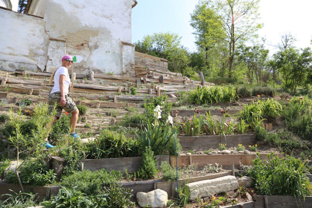 Nur die Harten kommen in den Garten - Bäume, Blumen, Garten, Pflanzen, Sträucher, Terrassen - HOFBAUER-HOFMANN Sofia - (Königsbrunn, Hippersdorf, Niederösterreich, Österreich)