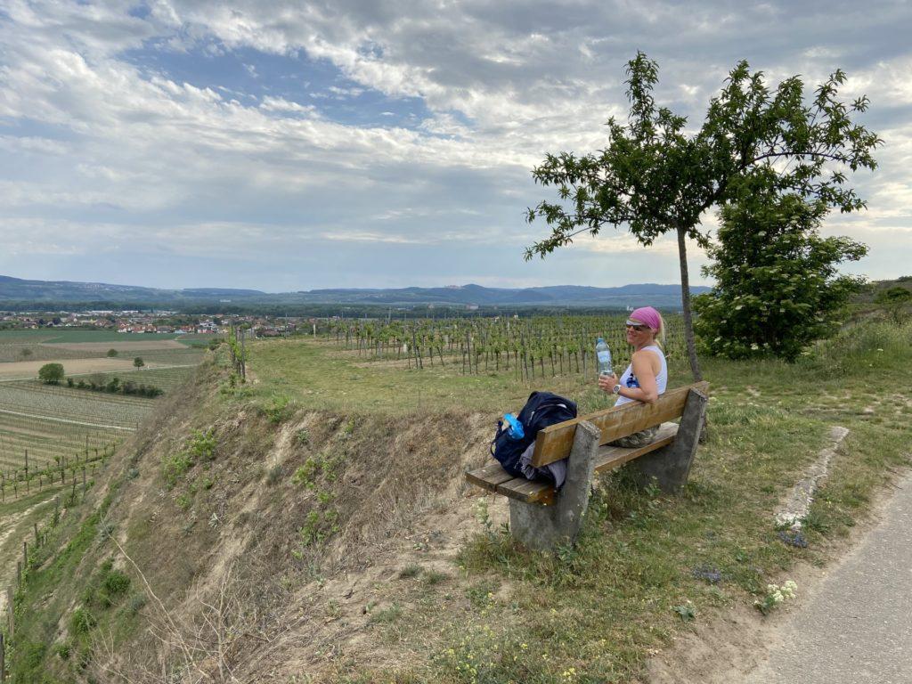 Jetzt noch die letzten Kräfte sammeln - Endspurt! - Ausblick, Aussicht, Bank, Baum, Felder, Himmel, Landschaft, Landwirtschaft, Rebstöcke, Weinbau, Weinreben, Weinstöcke, Wolken - HOFBAUER-HOFMANN Sofia - (Rohrendorf bei Krems, Gedersdorf, Niederösterreich, Österreich)