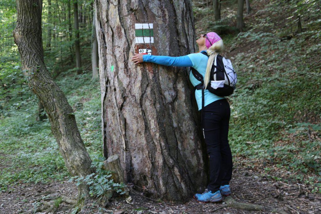Gesehen, umarmt, abgeschleckt..Meins! - Baumstamm, Kennzeichnung, Markierung, Natur, Wegweiser - HOFBAUER-HOFMANN Sofia - (Baden, Niederösterreich, Österreich)
