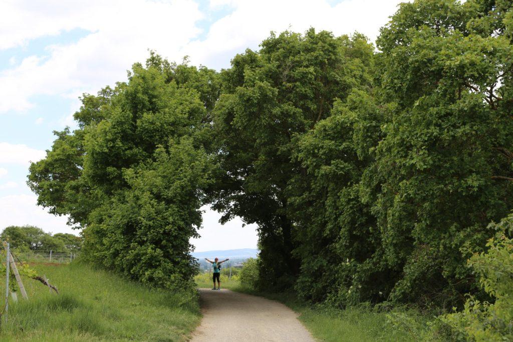 Betreten auf Eigene Gefahr! - Bäume, Natur, Weg - HOFBAUER-HOFMANN Sofia - (Großau, Niederösterreich, Österreich)