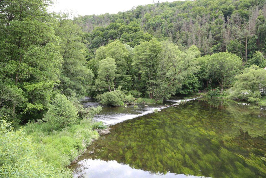 Hier wachsen Bäume sogar unter Wasser! - Fluss, Gewässer, Landschaft, Nationalpark Thayatal, Natur, Thaya, Thaya-Fluss, Thayatal, Wasser - (Hardegg, Niederösterreich, Österreich)