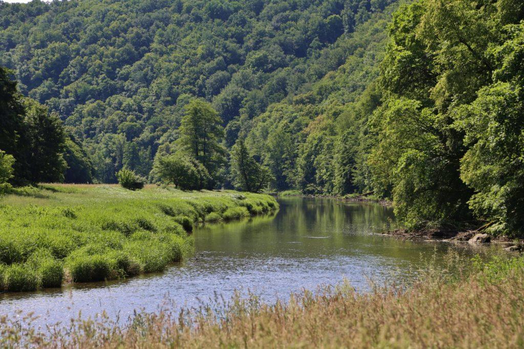 Die Natur malt die schönsten Motive! - Bäume, Fluss, Gewässer, Landschaft, Nationalpark Thayatal, Thaya, Thaya-Fluss, Thayatal, Wälder, Wasser - (Hardegg, Niederösterreich, Österreich)