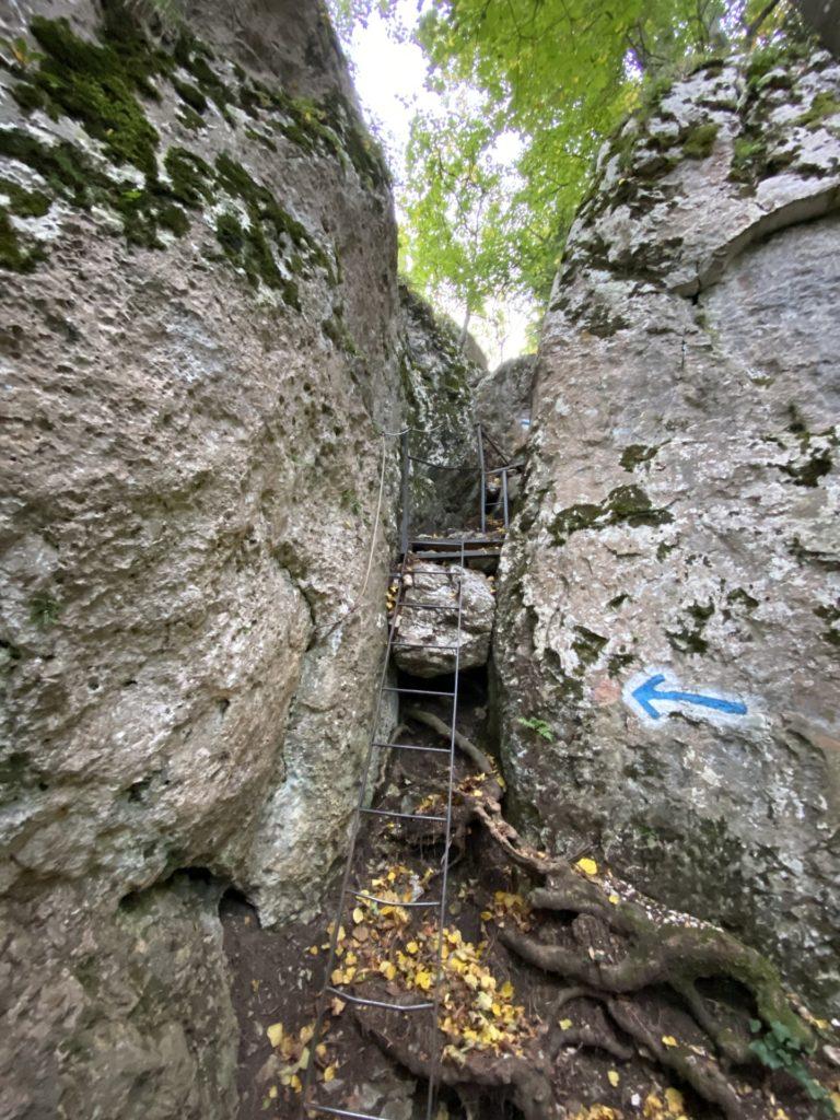 Zumindest verlaufen fällt am Drobilsteig nicht schwer - Drobilsteig, Felswand, Gestein, Hohe Wand, Natur - (Felbering, Dreistetten, Niederösterreich, Österreich)