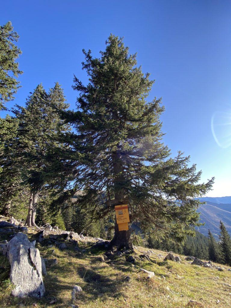 Unsere Post bringt allen was! - Bäume, Briefkasten, Gestein, Gippel, Himmel, Mürzsteger Alpen, Postkasten, Wiese - (Gschaidl, Kernhof, Niederösterreich, Österreich)