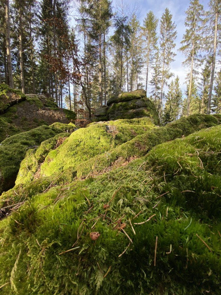 Moosgrün - Saftig - Waldviertlerisch! - Bäume, bewachsen, Bewuchs, Felsen, Flechten, Moos, Nebelstein Erlebnis-Wanderweg, Pflanze, Steine, Steinplatz, Vegetation, Wald - (Hirschenwies, Niederösterreich, Österreich)