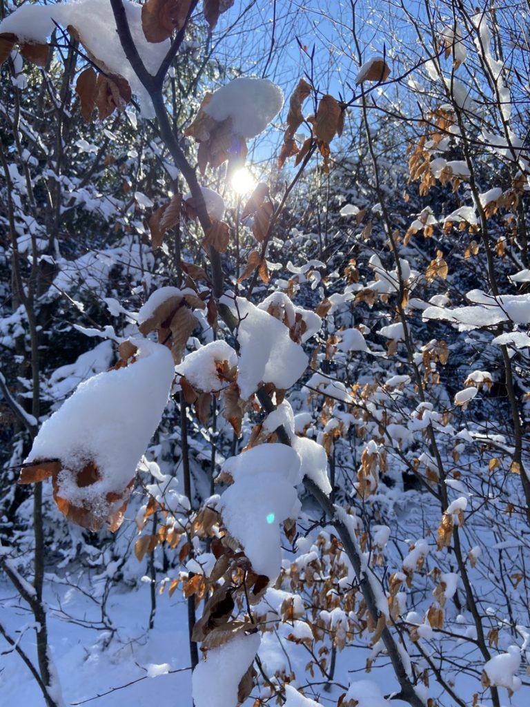 Tief verschneit der Wald unten noch im Winterkleid - Licht, Lichteinfall, Natur, Ramsau, Schnee, Sonne, Sonnenstrahlen, Strahlen, Unterberg - (Adamsthal, Kieneck, Niederösterreich, Österreich)