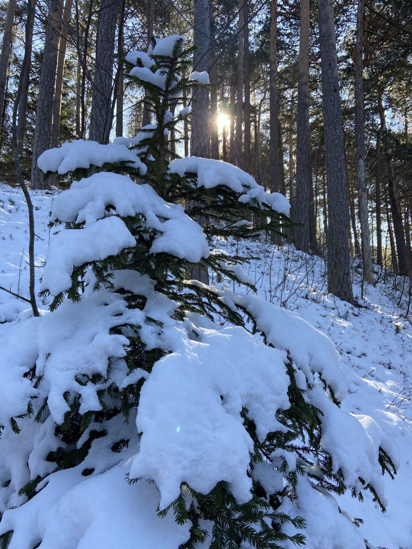 Winter im März, da lacht mein Herz! - Licht, Lichteinfall, Natur, Ramsau, Schnee, Sonne, Sonnenstrahlen, Strahlen, Unterberg - (Adamsthal, Kieneck, Niederösterreich, Österreich)