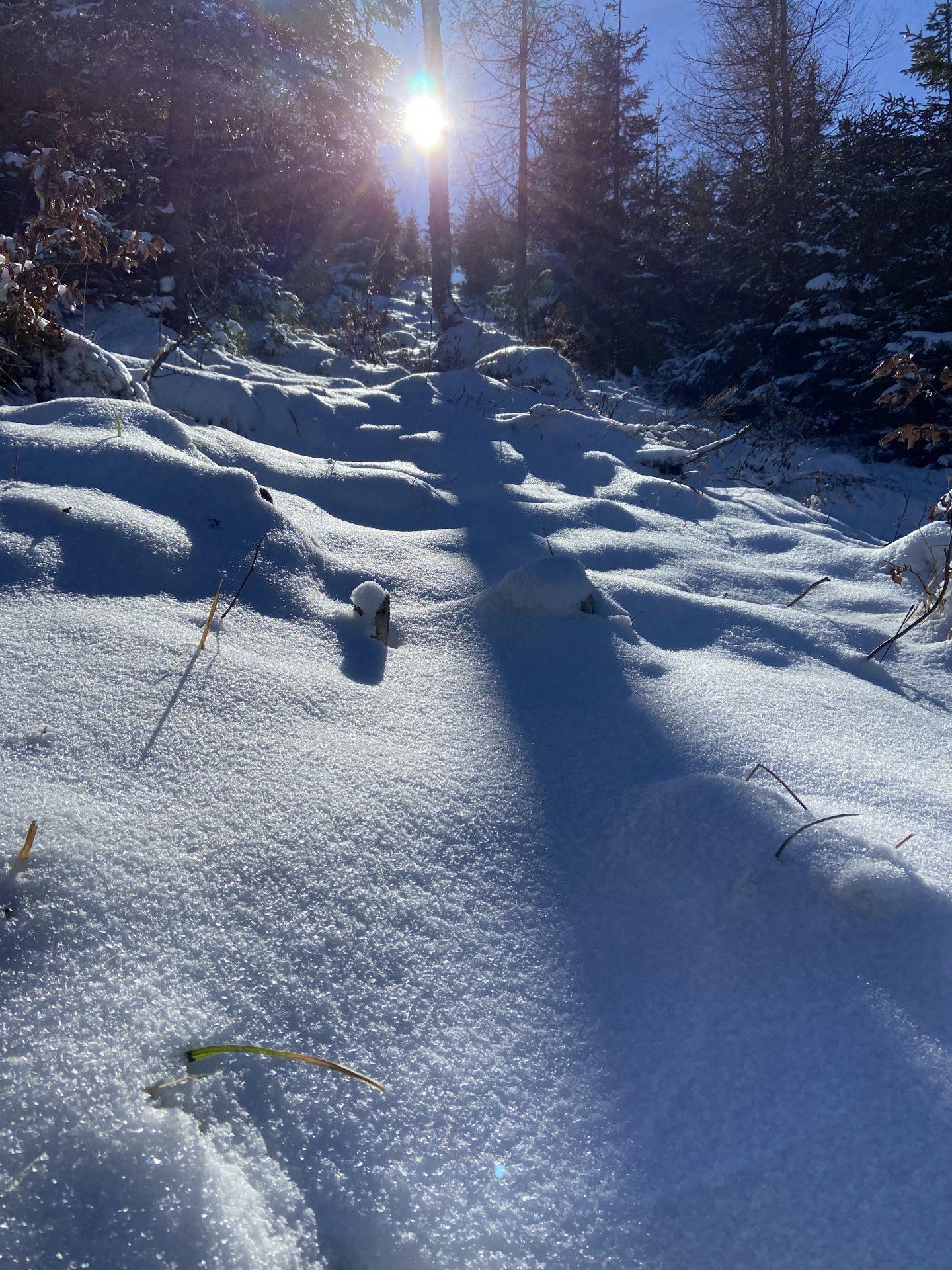 Die Märzsonne wirft lange Schatten in den Winterwald - Himmel, Kaiserwetter, Licht, Lichteinfall, Natur, Ramsau, Schatten, Schnee, Sonne, Sonnenstrahlen, Strahlen, Unterberg, wolkenlos - (Adamsthal, Kieneck, Niederösterreich, Österreich)