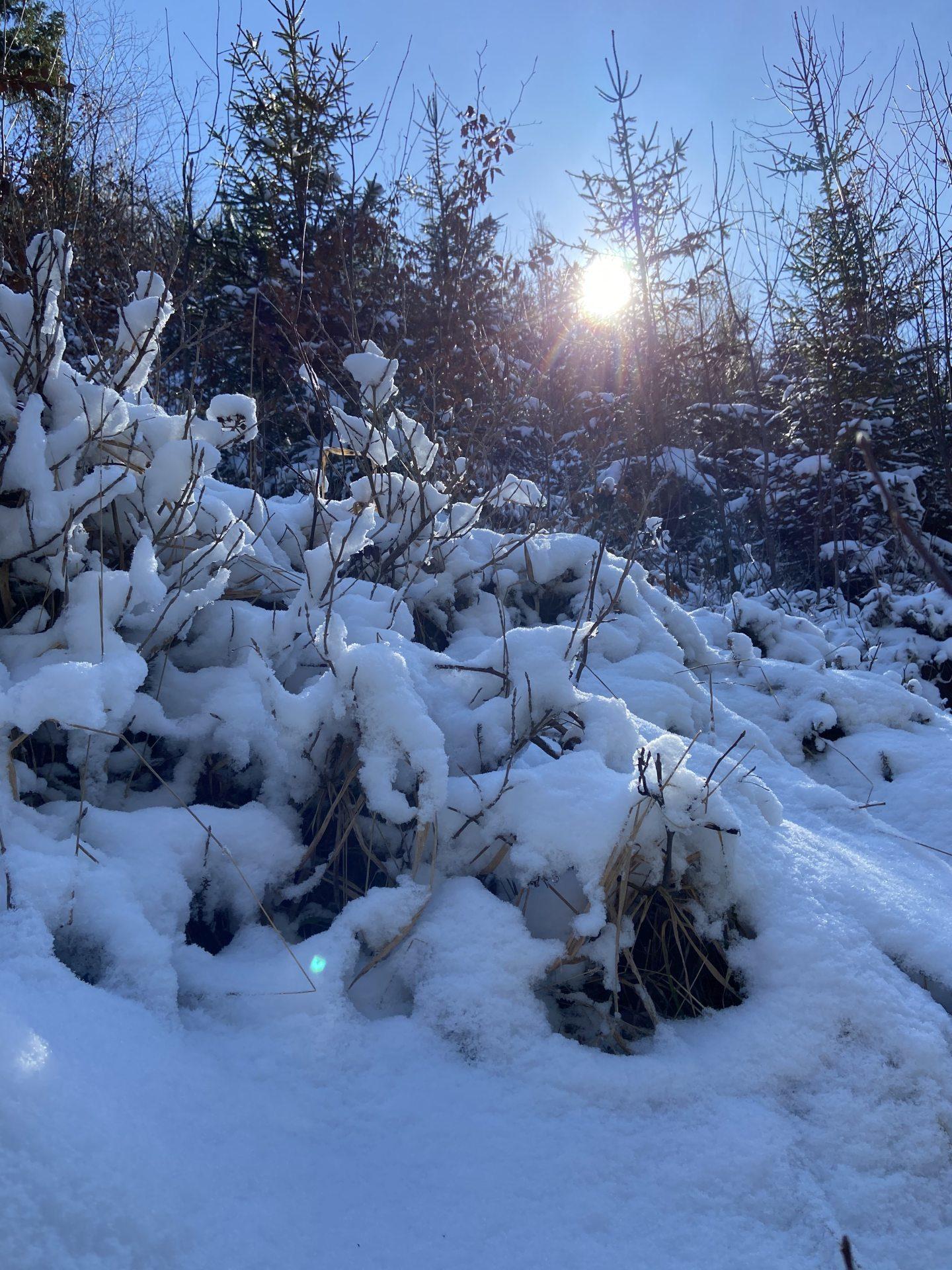 Winter im Frühling hat seinen ganz besonderen Reiz! - Bäume, Licht, Lichteinfall, Natur, Ramsau, Schnee, Sonne, Sonnenstrahlen, Strahlen, Unterberg - (Adamsthal, Kieneck, Niederösterreich, Österreich)