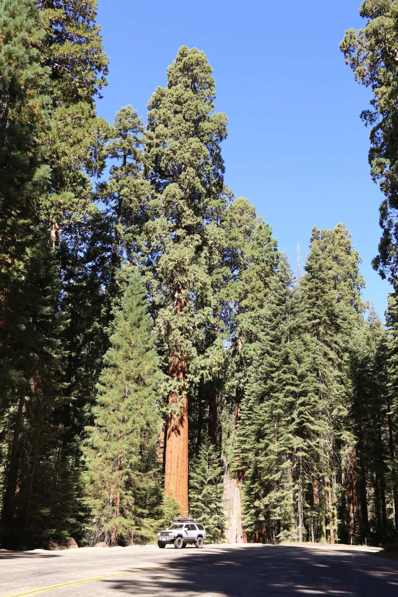 Hilfe, das Auto ist geschrumpft! - Auto, Bäume, Fahrzeug, Himmel, Kalifornien, KFZ, Mammutbäume, Riesenmammutbaum, riesig, Sequoia, Sequoia National Park, Strasse - (Stony Creek Village, Three Rivers, California, Vereinigte Staaten)