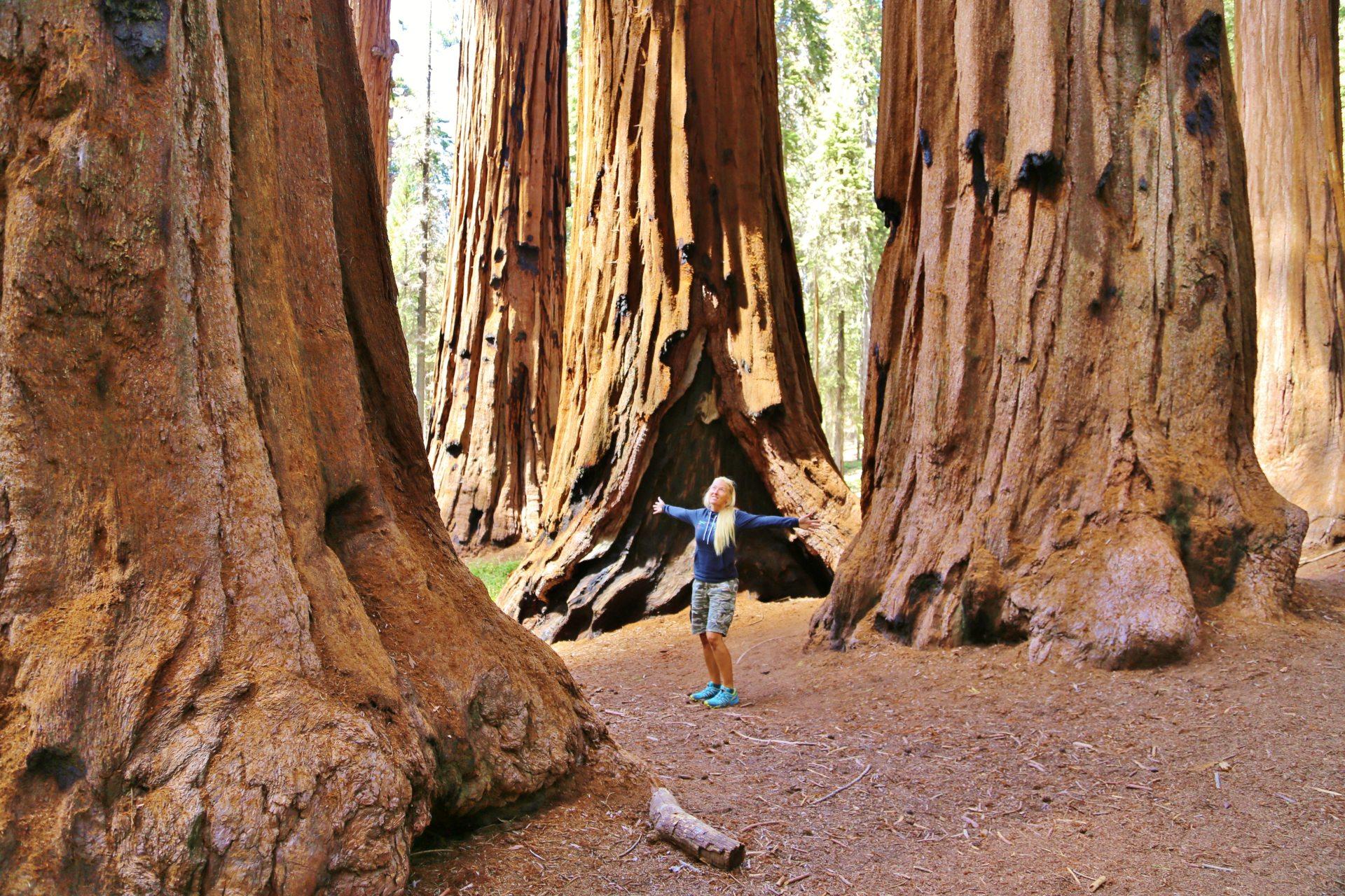 General Sherman Trail - Congress Trail - Mitten unter Elefantenfüßen! - Bäume, Baumstämme, Blondine, hoch, Kalifornien, malerisch, Mammutbäume, Personen, Portrait, Porträt, Riesenmammutbäume, riesig, Sequoia National Park, traumhaft, überdimensional - HOFBAUER-HOFMANN Sofia - (Pinewood, Sequoia National Park, California, Vereinigte Staaten)