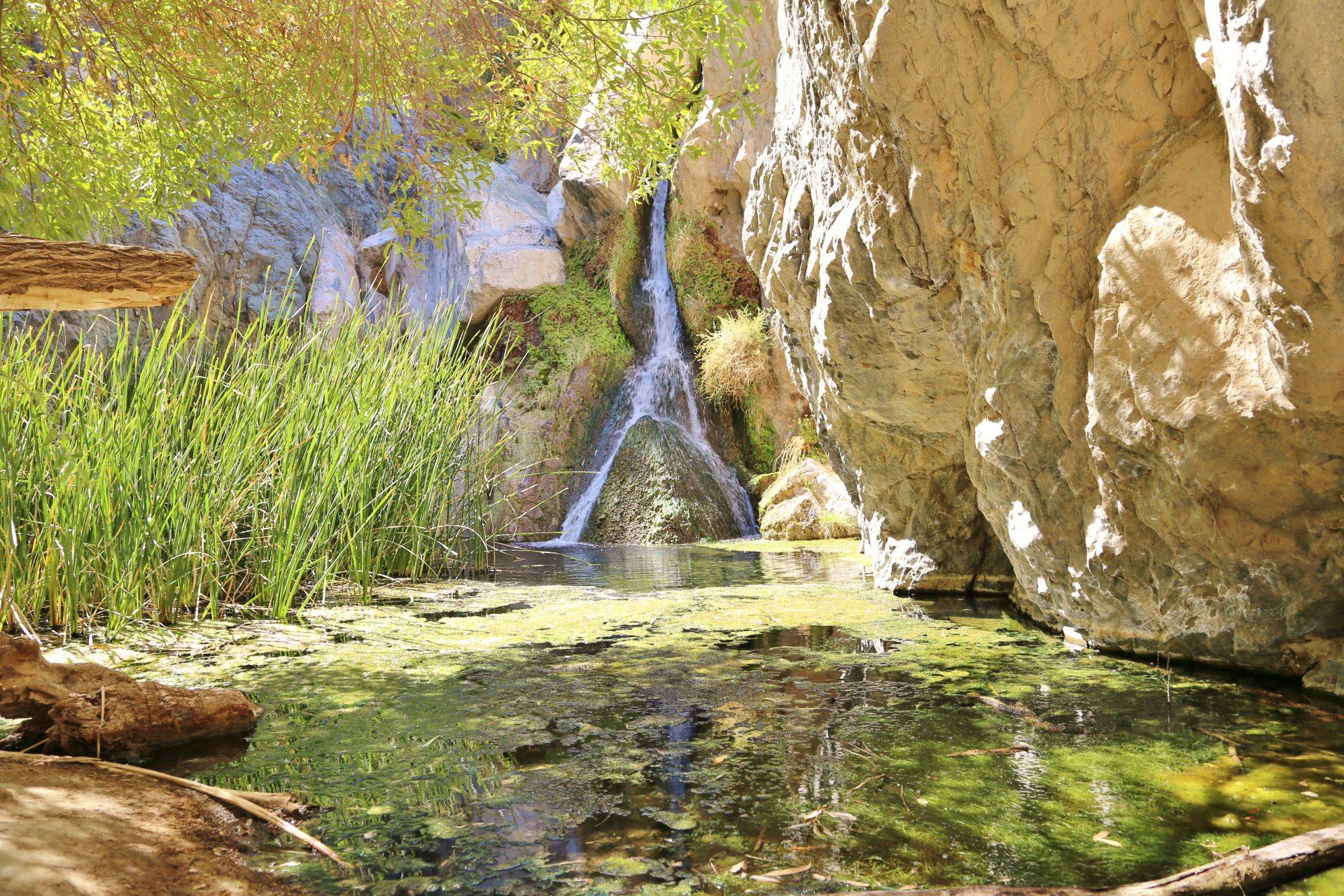 Fata Morgana oder wirklich die Darwin Falls? - Algen, Darwin Falls, Death Valley National Park, Felswand, Gestein, Gräser, Kalifornien, malerisch, Oase, traumhaft, Wasser, Wasserfall - (Panamint Springs, Darwin, California, Vereinigte Staaten)