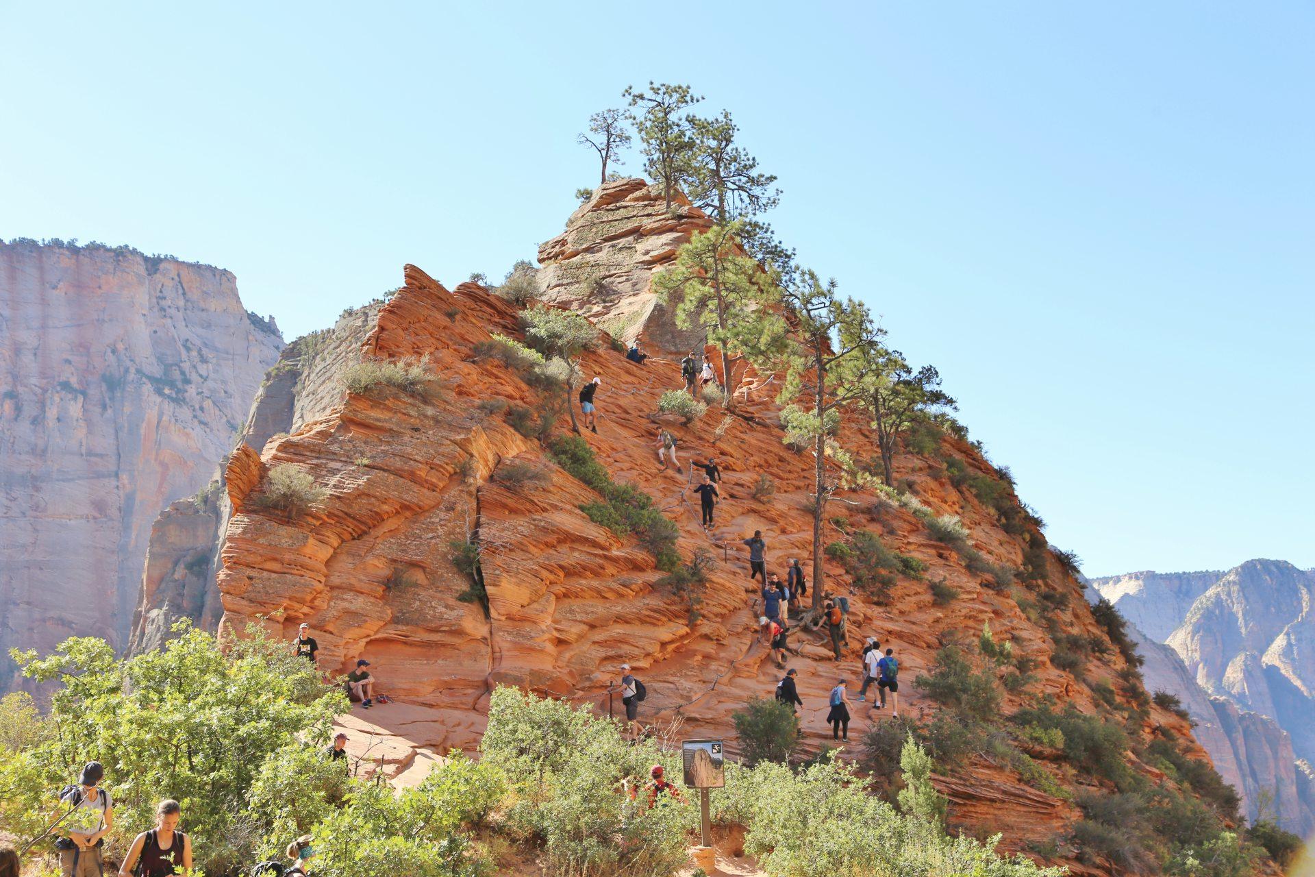 Angels Landing - diese Idee hatten wir nicht alleine! - Angels Landing Trail, Berge, Felsen, Felsnadel, Himmel, Menschen, Menschenmengen, Personen, Utah, Zion National Park - (Zion Lodge, Springdale, Utah, Vereinigte Staaten)