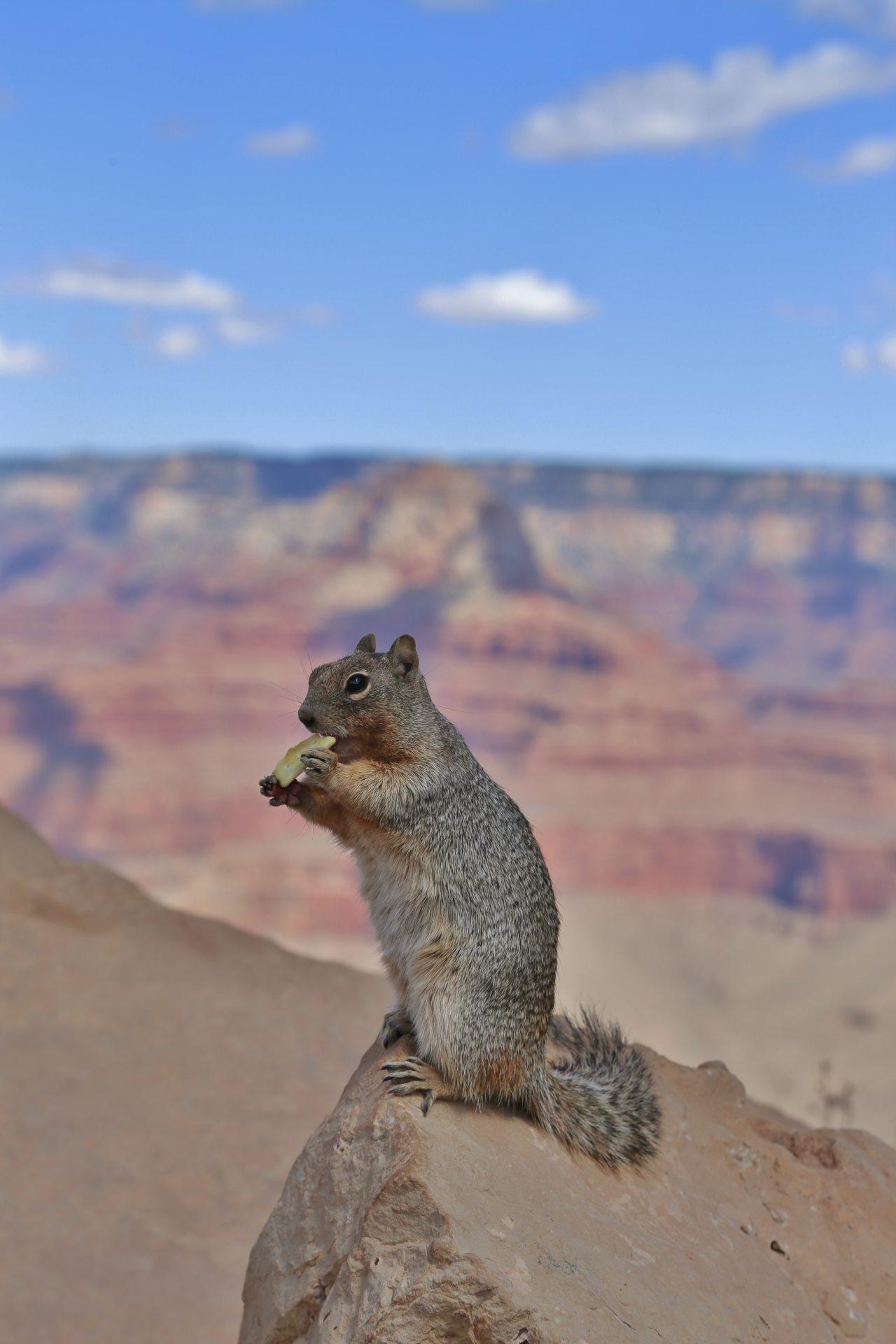 Geh mir nicht auf den Keks! - Arizona, Futter, Grand Canyon National Park, haarig, Himmel, hungrig, Keks, Nagetier, Portrait, Porträt, Pose, South Kaibab Trail, Squirrel, Tier, Wolken - (Grand Canyon, Arizona, Vereinigte Staaten)