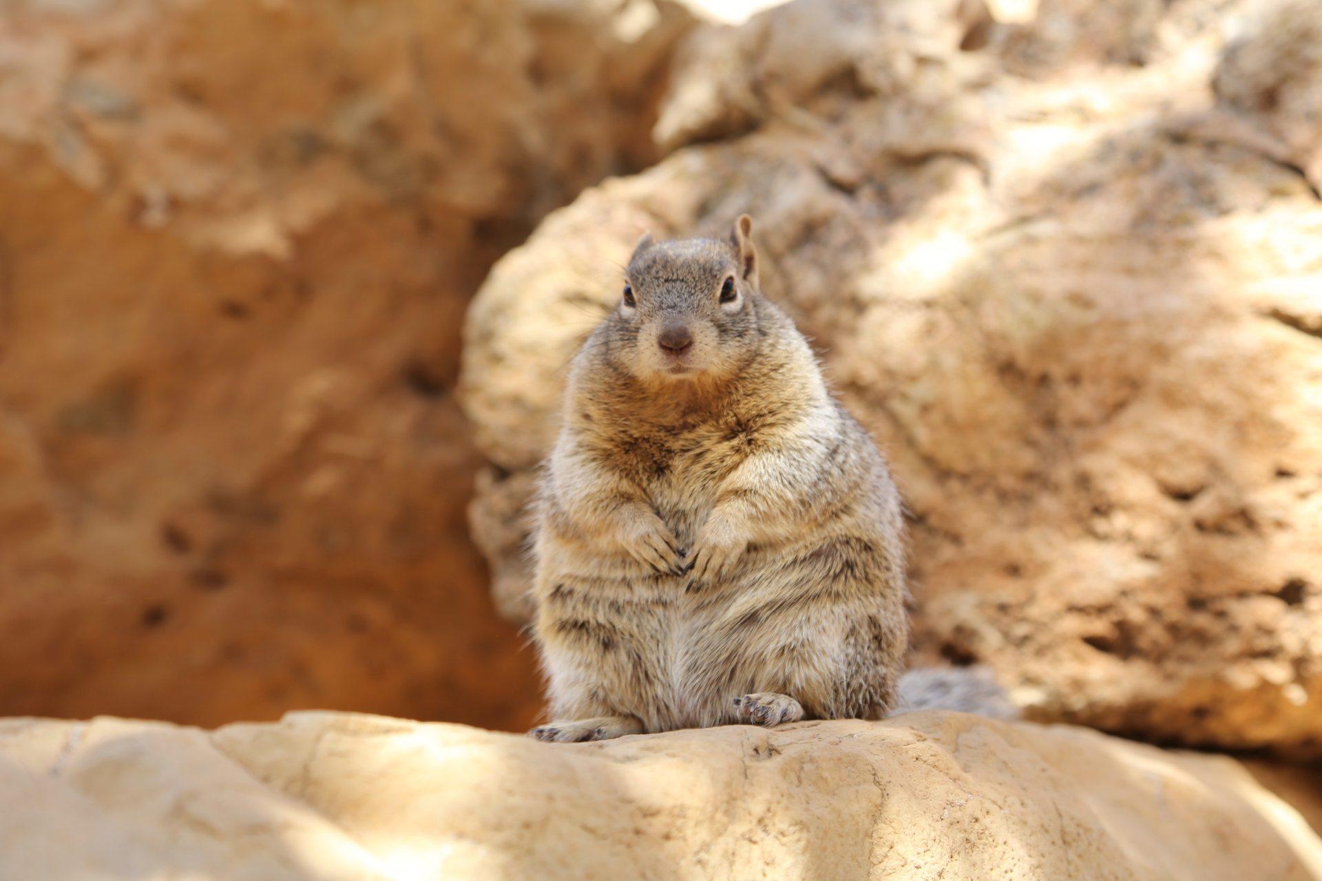 Winterspeck, na und? - Arizona, flauschig, Grand Canyon National Park, haarig, Himmel, Killerblick, Mach Männchen, Nagetier, Rim Trail, Squirrel, Tier - (Grand Canyon, Arizona, Vereinigte Staaten)
